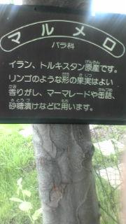 20100622130554.jpg